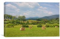 Hay Bales in Farm Field, Canvas Print