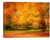 As The Leaves Fall, Canvas Print