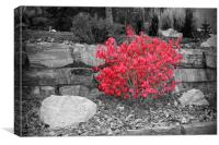 Fiery Red Bush, Canvas Print