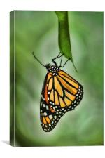 The Monarch, Canvas Print