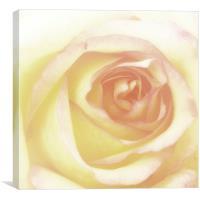 Whipped cream, Canvas Print