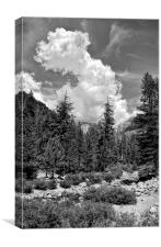 Tribute to Ansel Adams, Canvas Print