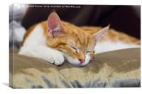 Cute Kitten, Canvas Print
