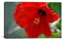 Vibrant Hibiscus, Canvas Print