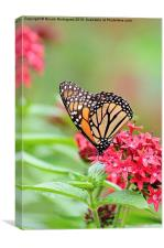 Peaceful Butterfly, Canvas Print