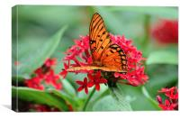 Passion Butterfly, Canvas Print