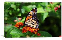 Wings of Nature, Canvas Print