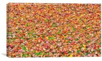 Fall Leaves, Canvas Print