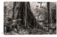 Banyan and Cypres tree, Canvas Print