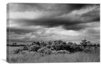 Everglades Storm BW, Canvas Print