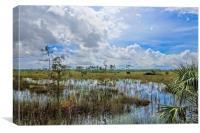 Florida Everglades 0173, Canvas Print