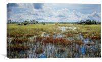 florida Everglades 0177, Canvas Print