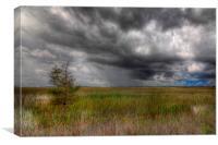 Everglades Storm, Canvas Print