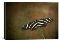 Zebra Longwing  Butterfly, Canvas Print