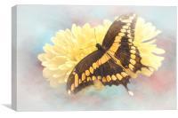 Grunge Giant Swallowtail, Canvas Print