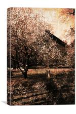 vintage cherry garden, Canvas Print