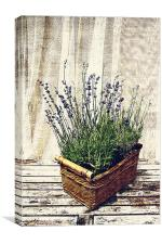 basket with lavender, Canvas Print