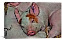 Pig Face, Canvas Print