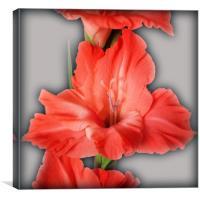 gladiola in pastel tones, Canvas Print