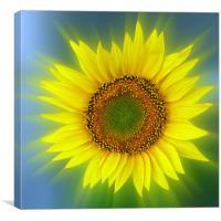 a bright sunflower, Canvas Print