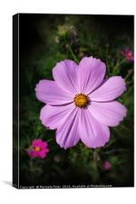 bright pink flowers, Canvas Print