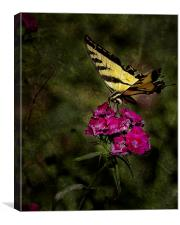 Ragged Wings, Canvas Print