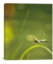 Blue Darner Dragonfly - Green Water and Light, Canvas Print