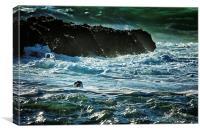 I Spy a Seal, Canvas Print