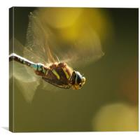 Golden Wings, Canvas Print