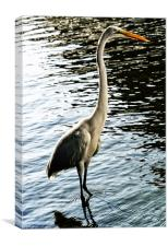 Great White Egret, Canvas Print