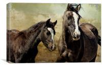 Feldspar and Ohanzee - Pryor Mustangs, Canvas Print
