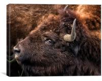Wild Eye - Bison, Canvas Print