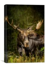 The Bull Moose, Canvas Print