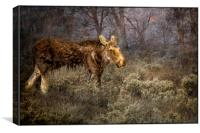 The Calm of a Moose, Canvas Print