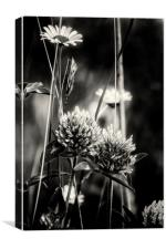 Thistles and Daisies, Canvas Print