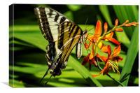 Swallowtail on the Crocosmia, Canvas Print