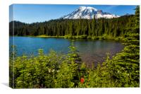 Wildflower Color by Reflection Lake and Mt Rainier, Canvas Print