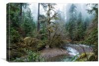 A Creek Runs Through It, Canvas Print