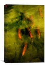 Sockeye Salmon at Potter Marsh, Canvas Print