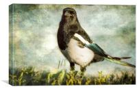 Message from the Magpie, Canvas Print