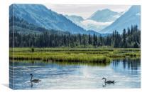 Swans on Tern Lake, Canvas Print