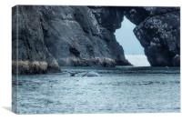 Two Humpback Whales in Resurrection Bay, Canvas Print