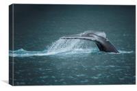 Whale Tail, Canvas Print