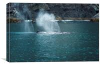 Humpback Whales Spouting, Canvas Print