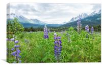 Lupin and the Beauty of Alaska, Canvas Print
