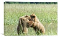 Brown Bear Cubs - Wrestling Match, Canvas Print