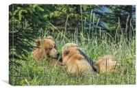 Triplet Bear Cubs Nursing, No. 1, Canvas Print