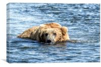Brown Bear Cooling Off, Canvas Print
