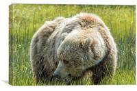 Mama Brown Bear, No. 1, Canvas Print