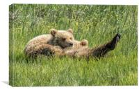 My Foot's So Pretty, Oh So Pretty - Bear Cubs, No., Canvas Print